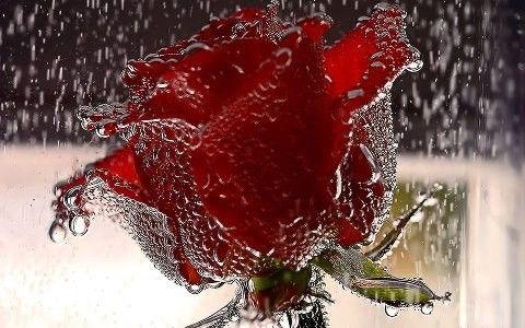 Poeme d amour - Flower wallpaper dp ...